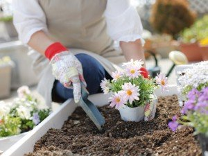 Основы садовника