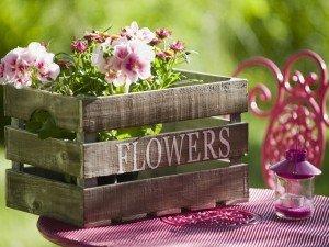 Позаботьтесь о цветы, которые будут цвести летом!