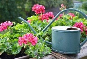 Какие цветы на балкон?