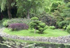 7 самых красивых растений в водоем! Выберите подходящие для вашего сада!