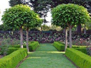 Посадите деревце перед домом или на балконе. Может быть, цветущие, с декоративными листьями или плодами. Исследуйте несколько видов