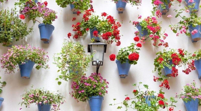 Создайте в доме или на открытом воздухе парящий сад в горшках подвесных
