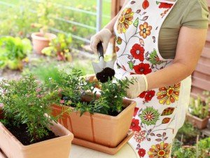 Rozsada цветов и овощей
