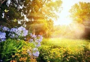 Какие садовые цветы любят тень? Вот 5 растений, которые будут расти в затененном месте!