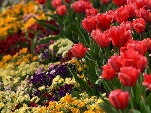 20 вопросов для садовника