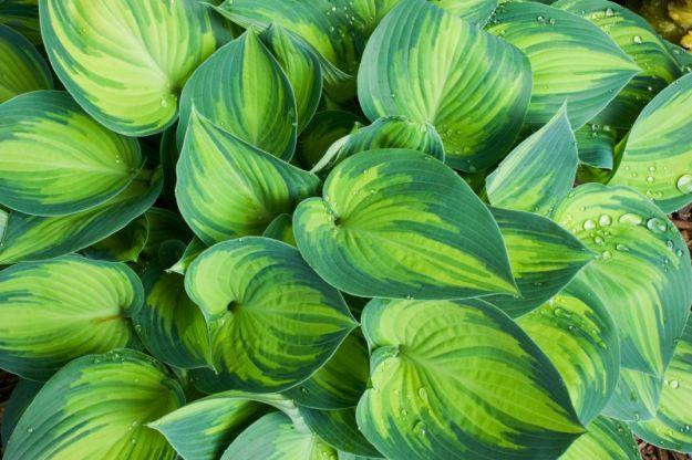Узел_а лист - самые красивые листья в саду