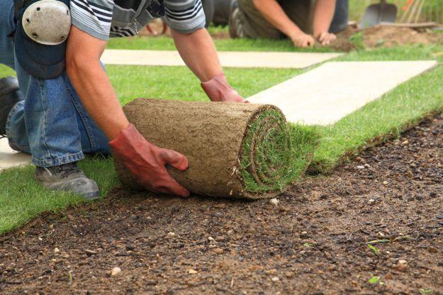Создание газона - сеяние семян и укладка газона из рулона