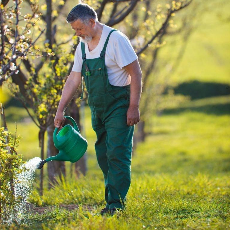 Природные спреи против вредителям и болезням растений