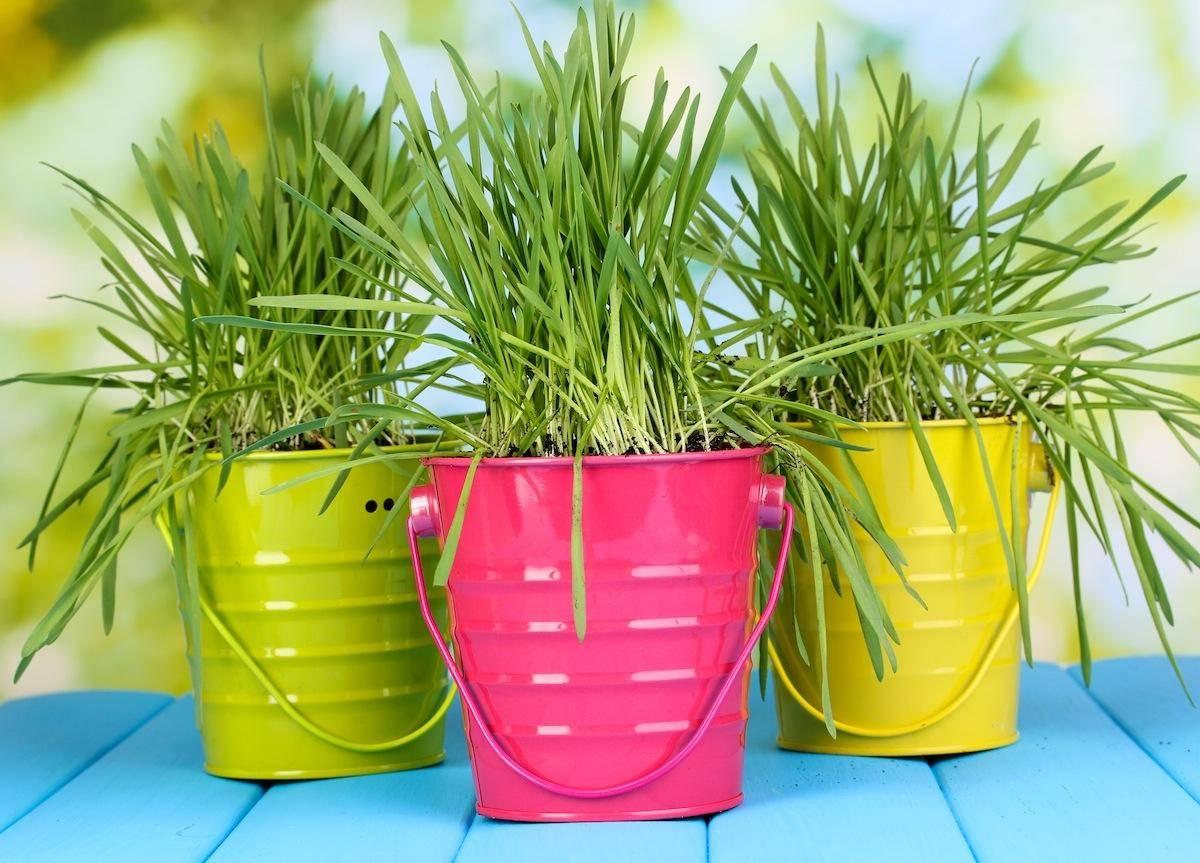 Посмотреть какие горшки металлические, стоит выбрать, чтобы подчеркивали красоту цветов и создавать им хорошие условия для роста
