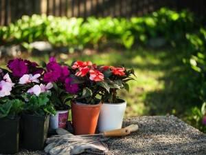 Наш список цветов на балкон северный