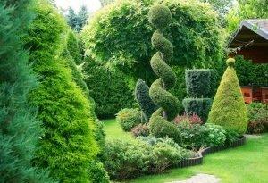 Посадите декоративные лиственные кустарники. Частности, ваш сад!