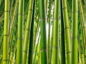 Знаете ли вы, что растение растет быстрее всего?