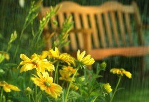 Какие цветы надо иметь в саду?