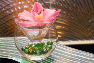 Домашняя выращивание орхидей