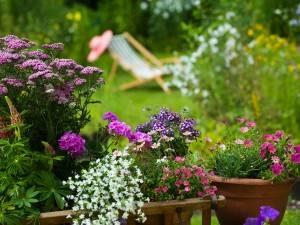 Цветы в горшках это efektowana украшения сада, террасы и балкона. Вот идеи для композиций и правила ухода за