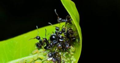 Способы муравьев в саду