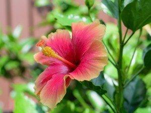 Вы хотите иметь балкон, полный экзотических растений? Планируйте его уже сейчас!