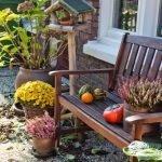 Удобрение растений осенью — подготовка растений растений к зиме