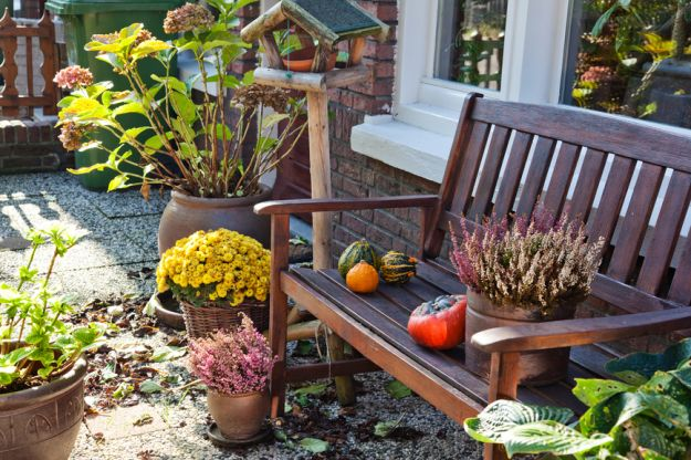 Удобрение растений осенью - подготовка растений растений к зиме