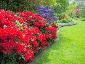 5 декоративных кустарников, которые вызовут ваш восторг