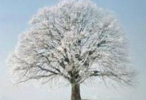 Знаете ли вы, что трава под деревьями не замерзает?