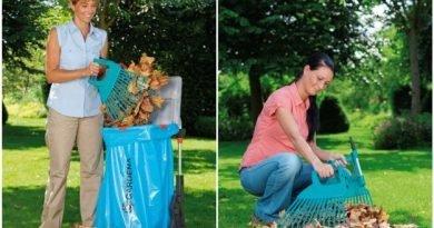 Осенний учебник садовника - как вырастить газон