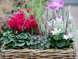 Вот 7 самых нужных цветов в горшках, которые подходят на подарок