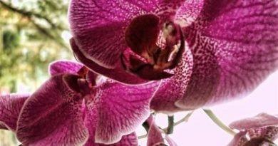 Орхидеи - красочное украшение вашего окна