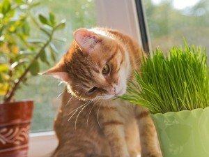 Растения, которые будут безопасны для вашей кошки! Что вы можете держать на подоконнике?