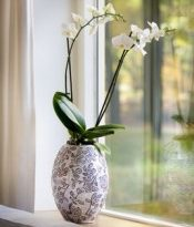 Мода на орхидеи