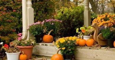 Календарь садовода на осень