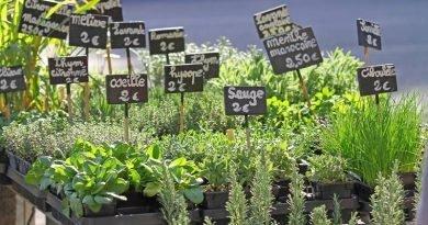 Как выращивать травы на балконе и в саду?