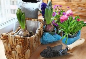 Как ухаживать за комнатными цветами?