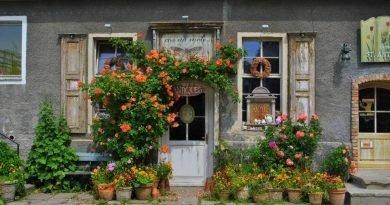 Вазоны садовые - 5 идей, чем посадить растения