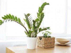 Цветы в горшках зеленые -милые лилипуты и впечатляющие гиганты. Которыми вы сможете украсить свою квартиру?