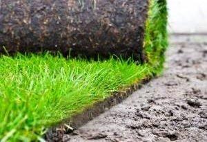Красивый газон за один день? Так, если вы ставите на траву с роликом!