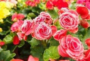 Самые красивые цветы для садовых плантаторов