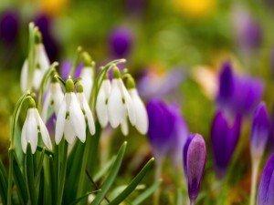 Как понять, что весна пришла? 7 признаков весны