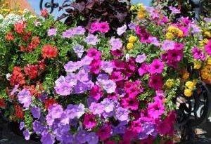 Восточный балкон в цветах и pnączach
