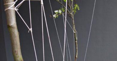 Сад на высоте. Подвесной растительный дизайн String Gardens