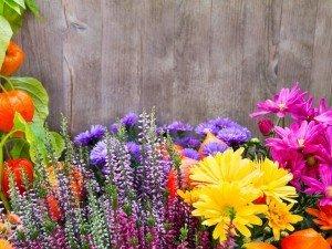 7 самых красивых осенних цветов