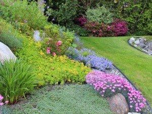 Как ухаживать за цветами скал?