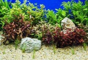 9 эффектных и мало требовательных аквариумных растений