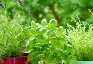 Установите гербарий на балконе