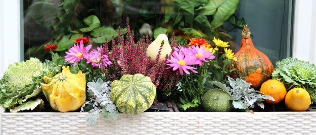 Осенние хлопоты на балконе