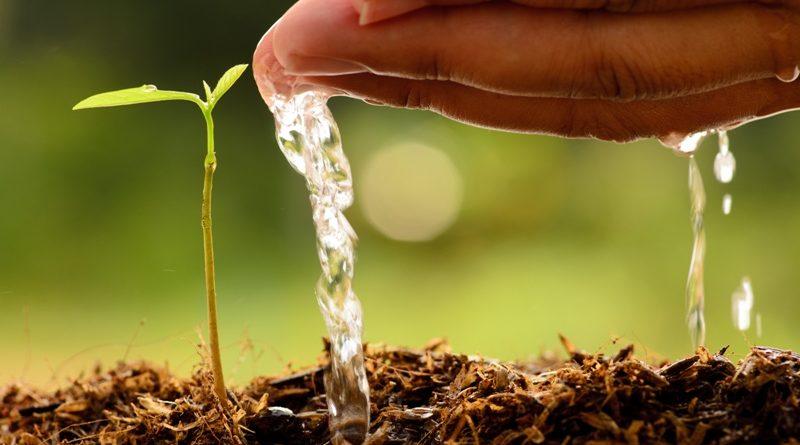 Натуральные удобрения: компост, торф, навоз
