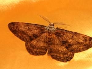 Знаете ли вы, почему мотылек летит на свет?