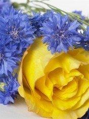 Самые модные срезанные цветы - Лето 2008