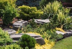 Трава pampasowa - самая прекрасная из трав. Вы можете иметь ее в своем саду!
