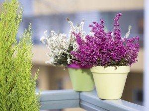 Покажите нам фото вашего сада и выиграть призы. Список победителей конкурса!